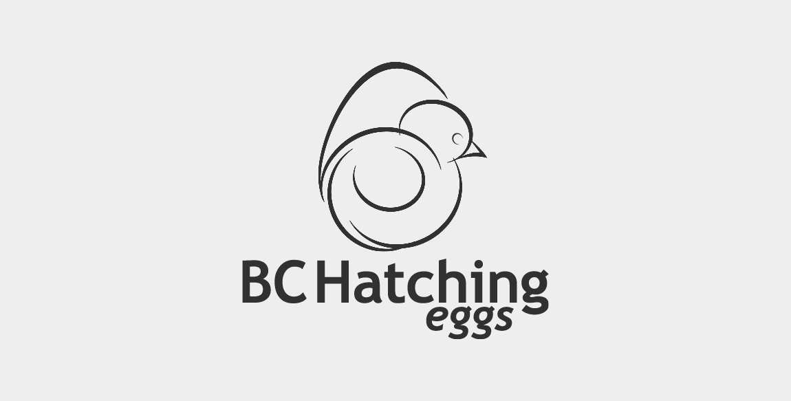 Broiler Hatching Egg Producers