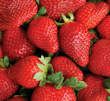 Static image - BC Strawberry Growers' 3