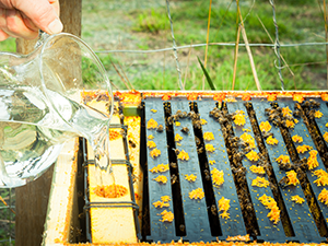 BC Honey Producers' Semi-Annual AGM 2018