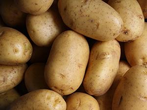 Potato Veg AGM