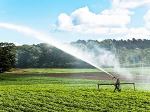 Webinar - produce irrigation