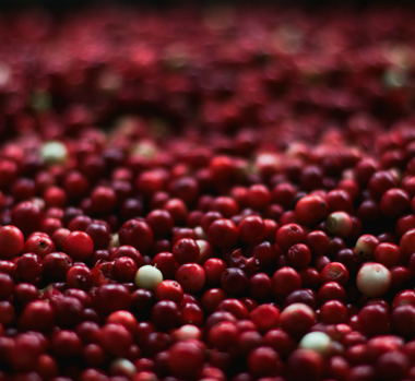 Static image - BC Cranberry Growers' Association 1