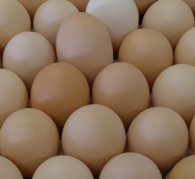 Static Image_BC Broiler Hatching Egg Producers Association