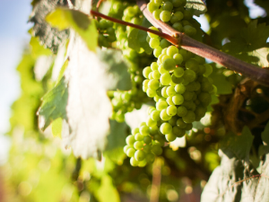 Grapegrowers' AGM